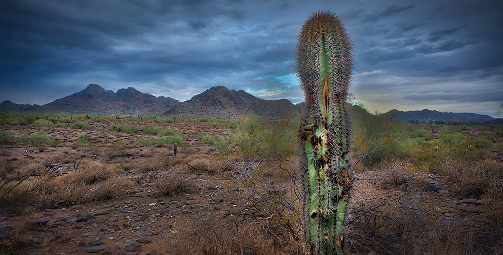 Cactus Phoenix Mountain Preserve