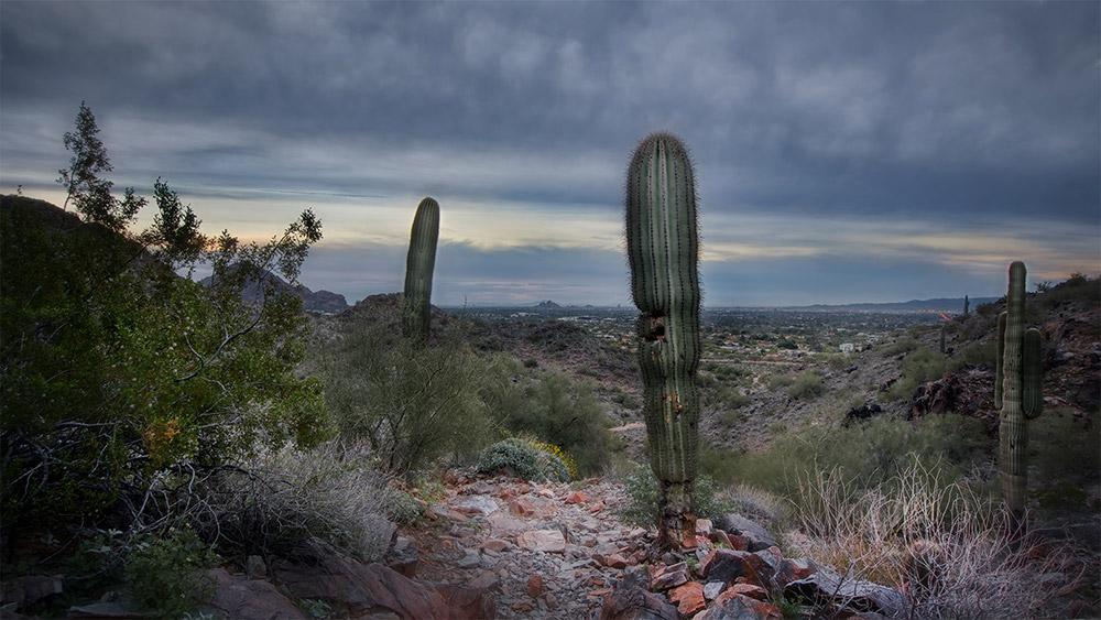 Phoenix Sunrise PMR