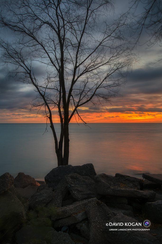 Autumn Tree - Orange Sky